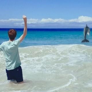 Samsung_Dolphin