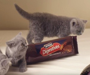 McVitie's TV Advert 2016 - Kittens
