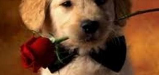 valentine's_day_funny
