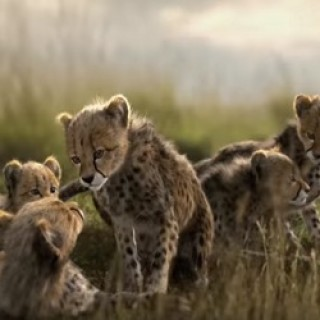 Mazda_CX-5_Cheetahs_Commercial