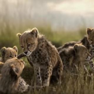 Mazda_CX-5_Cheetahs_Commercial