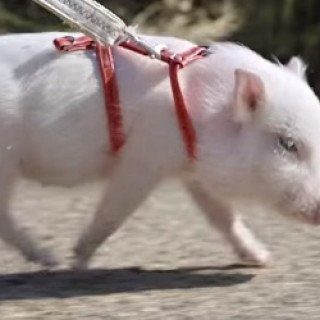 Chase_Bank_Pig_Commercial