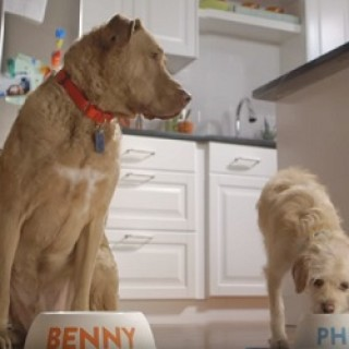 Purina_Beneful_Commercial_2016