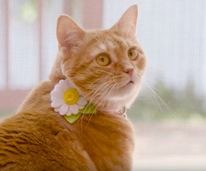 Purina ONE Cat Commercial 2016