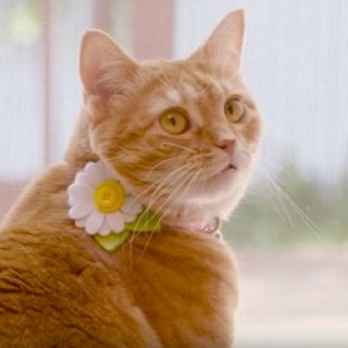 Purina_ONE_Cat_Commercial