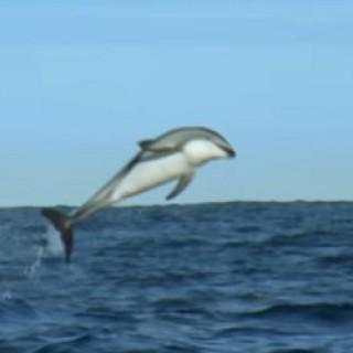 Dolphin_Acrobatics_2016