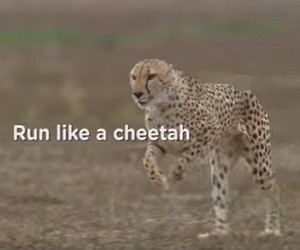Pampers Cruisers Diapers Commercial 2016 - Run Like a Cheetah