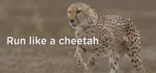 Pampers_Cheetah