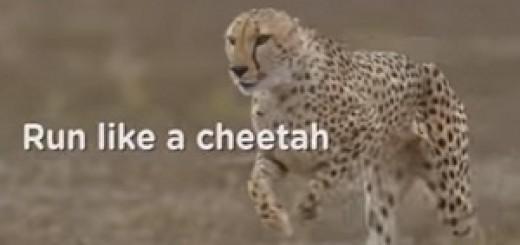 Pampers_Cheetah