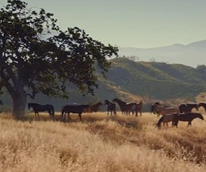 State Farm Insurance Commercial 2016 - Wild Mustangs