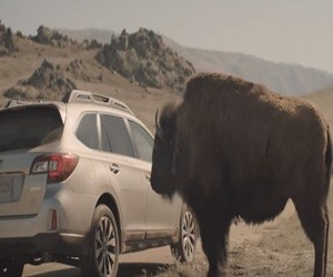 Subaru Outback Commercial 2016 - Bison