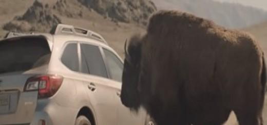 Subaru_Outback_Bison