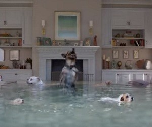 Farmers Insurance Flooded House Dog Diving Competition Commercial 2016 - Mer-Mutts