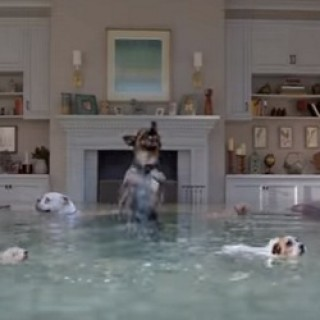 Farmers_Insurance_Flooded_House_Dogs