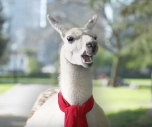 Bank of America Commercial - The Mayor