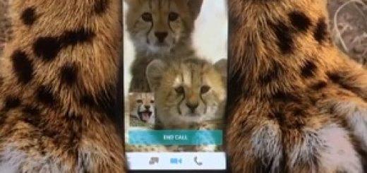 optimum_cheetahs_commercial