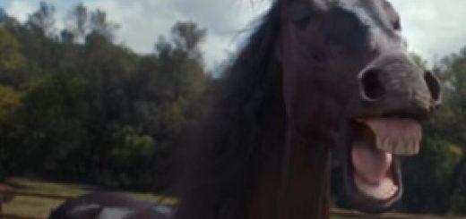 volkswagen_laughing_horses