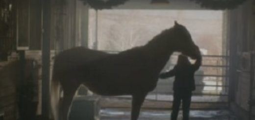 purina_mills_horse