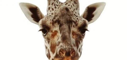 aldi_giraffe_advert