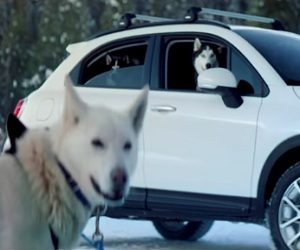 Fiat 500X Crossover Commercial 2017 - Dogs