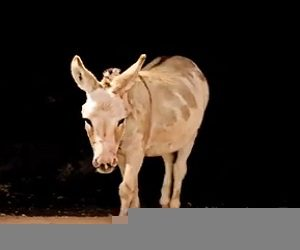Mucho Burrito Donkey Commercial