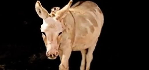Mucho_Burrito_Donkey