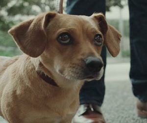 U.S. Bank Dog Commercial 2017