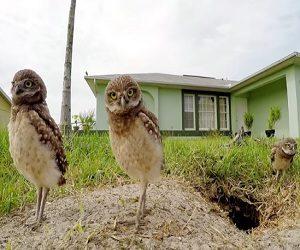 GoPro Commercial 2017 - Dancing Owls
