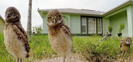 GoPro_Owls_Commercial