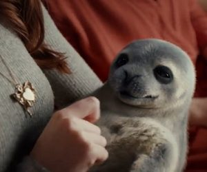 McVitie's TV Advert - Baby Seals