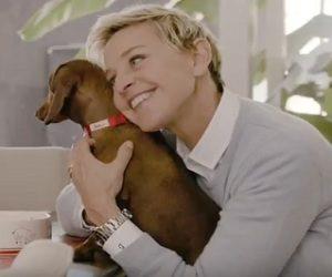 PetSmart Commercial 2017 - Ellen DeGeneres