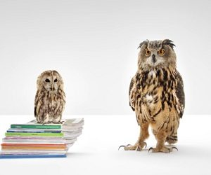 WGU Owls Commercial