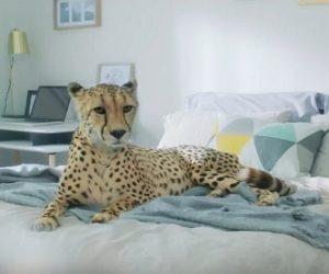 Bonprix Werbung - Der Gepard