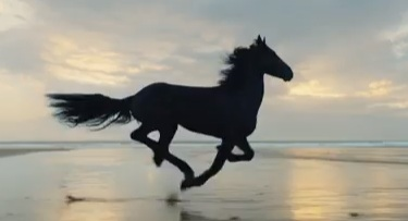 Black Horse (Lloyds Bank Advert 2017)