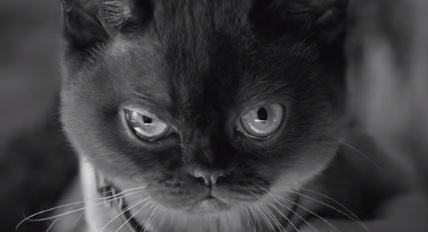 Givenchy Cats Commercial