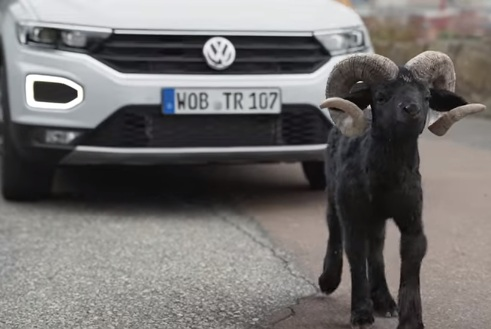 Bighorn Sheep in 2018 Volkswagen T-Roc Commercial