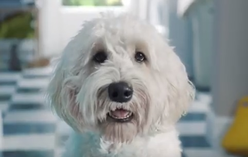 Flash Ultra TV Advert - Singing Dog