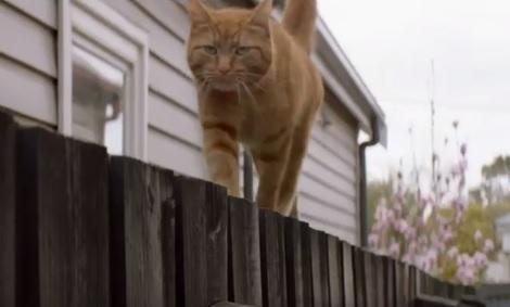 AAMI Cat Burglar Commercial - Lorraine