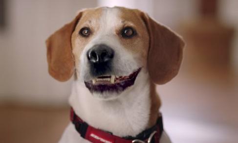 Go Outdoors TV Advert - Singing Dog