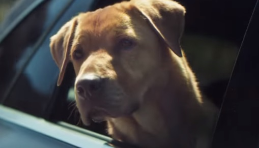 Mercedes Dog Commercial