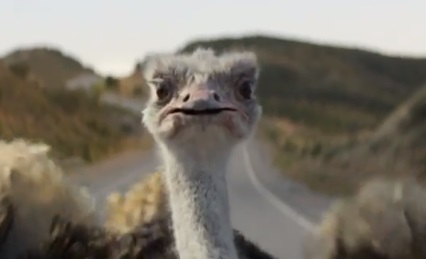 Progressive Commercial - Biker vs Ostrich