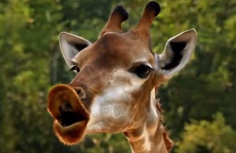 Metro by T-Mobile Commercial - Giraffa