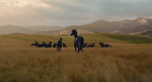 Lloyds Bank Black Horses Advert