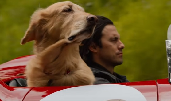 The Art of Racing in the Rain (2019 Movie) - Actor Milo Ventimiglia & Dog