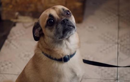 It's Bruno - Netflix Series Dog