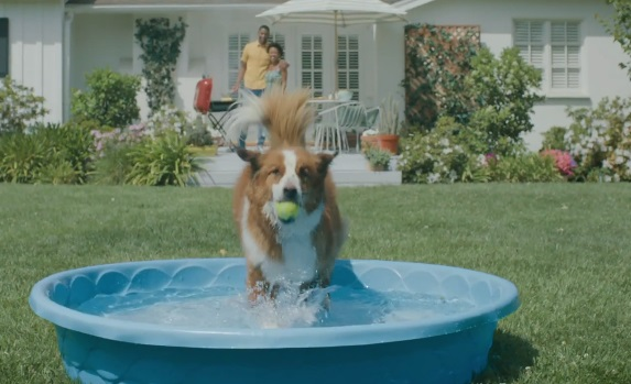 Quicken Loans Commercial - Dog Diving in Inflatable Pool