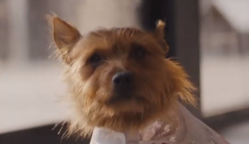 Target Australia Christmas Commercial Dog