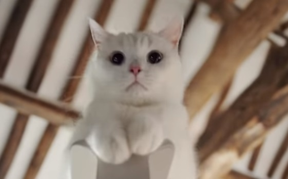 Samsung Serif TV Cat Commercial