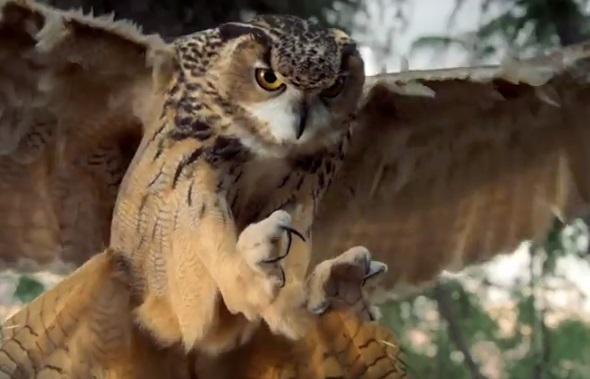 WGU Owl Commercial