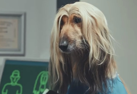 Pot Noodle Advert Long-Haired_Dog